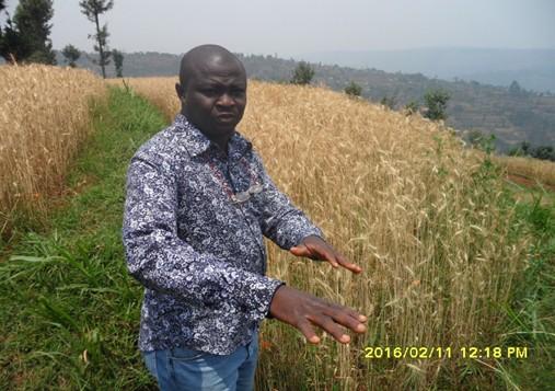 Dr Wole Fatunbi FARA Cyumba IP wheat field Rwanda agrinatura