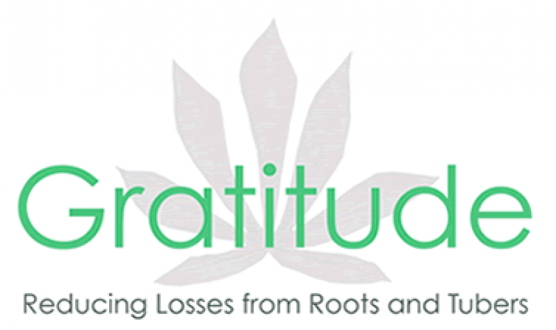 NRI: Adding value to root crop wastes – the Gratitude project disseminates its findings