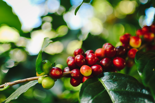 Interesting value chain analysis in Angola on coffee – call for Experts!