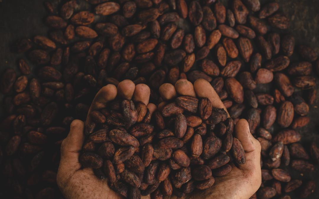 Agrinatura looks for Experts! Cocoa in Cameroon!