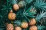 Agrinatura is Looking for new Experts! Pineapple in Benin!