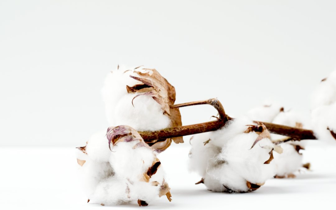 Value Chain Analysis in Ethiopia on cotton – Call for Experts!
