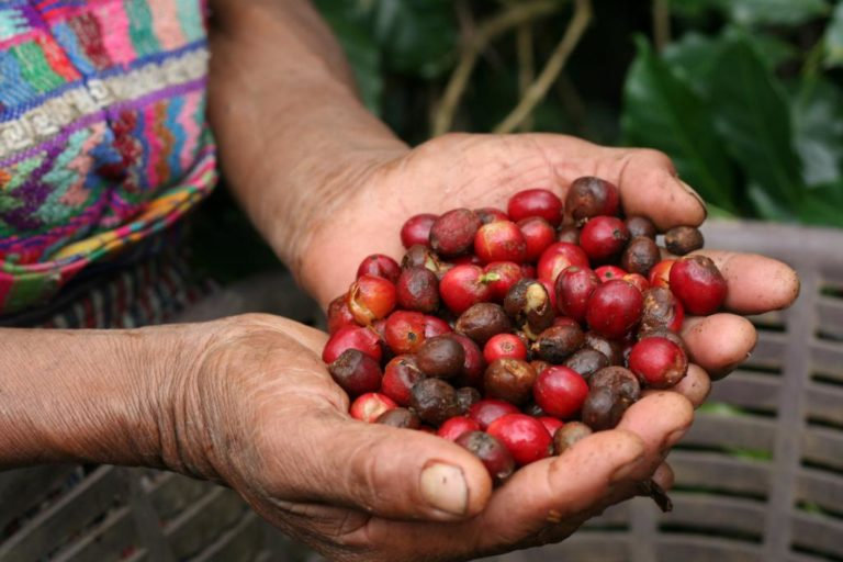 Extended DDL 16th January!!! Interesting value chain analysis in Ecuador on coffee – expert needed!