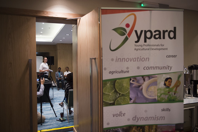 YPARD director